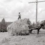 8-87 : Les foins à Sainte-Agathe-des-Monts en 1943. Photographe Georges Beullac
